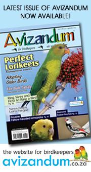 Avizandum Magazine