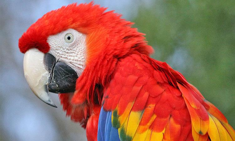 Macaw Mesh